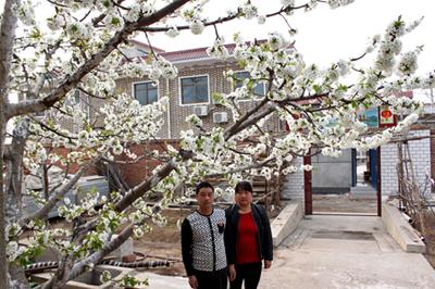樱桃开花期